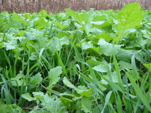 Planting Fall Food Plots