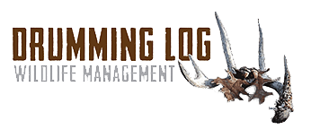 Drumming Log Wildlife Management